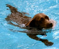 A dog enjoying a hydrotherapy session
