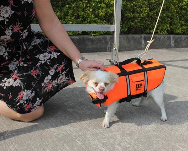 coastal dog harness instructions
