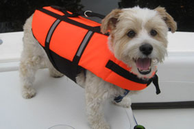 Small dog in an Up Buoy Lifejacket
