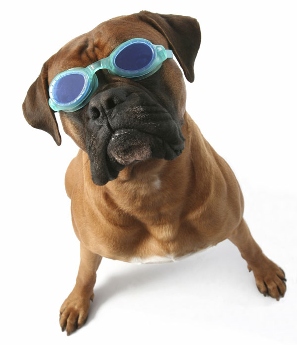 Dog in Swimming Goggles
